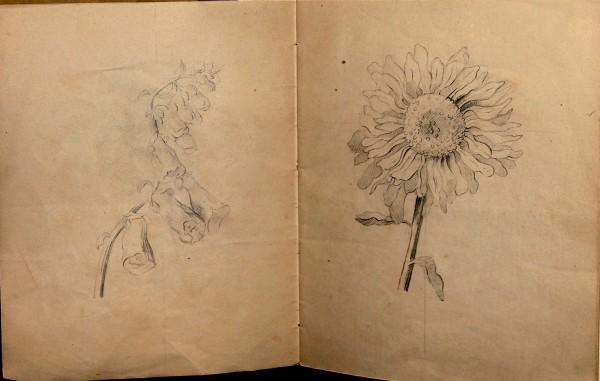 Ida Thieles tegnebog med studier af blomster.