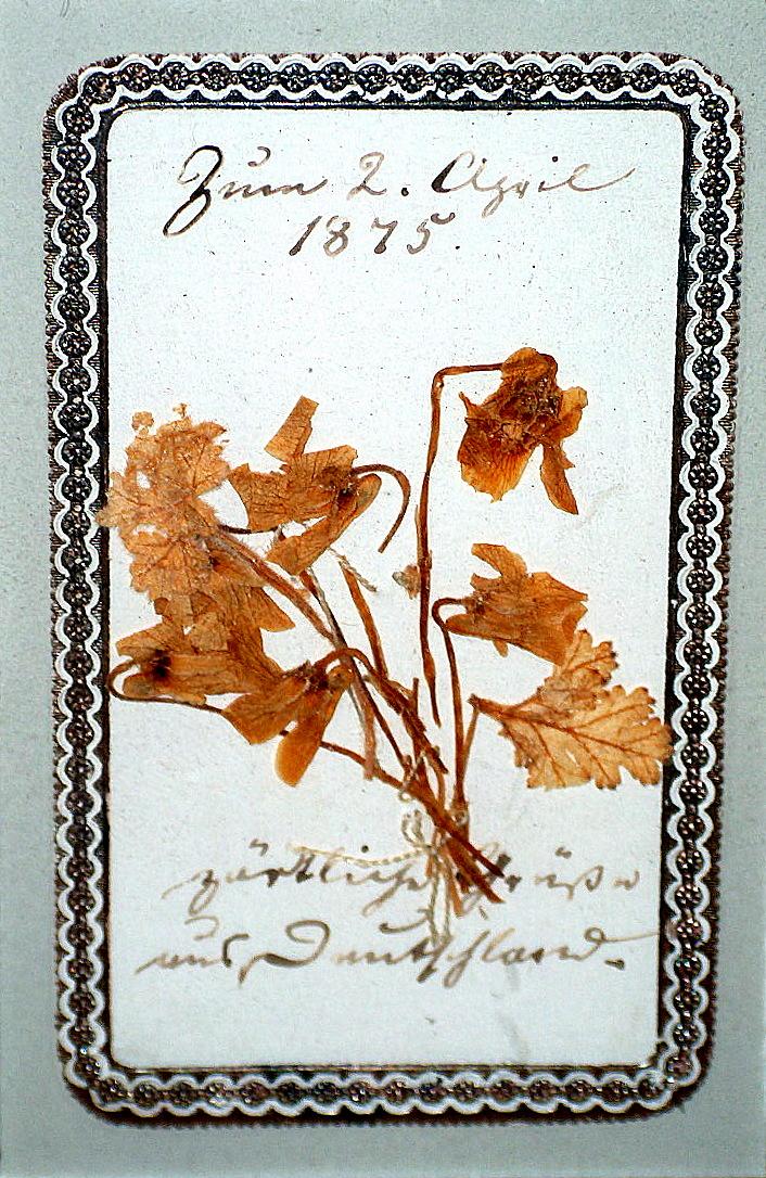 Blomsterhilsen sendt H.C. Andersen fra Tyskland 2. april 1875. Foto: Lars Bjørnsten Odense 2003