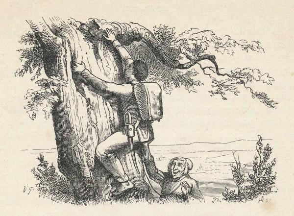 """Illustrationer til H.C. Andersens eventyr """"Fyrtøjet"""" udført af tegneren Vilhelm Pedersen ."""