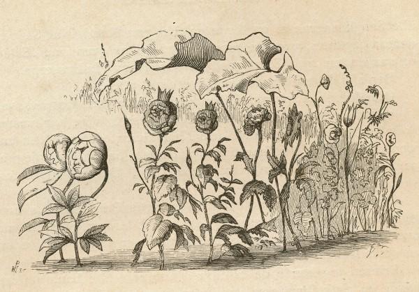 """Illustrationer til H.C. Andersens eventyr """"""""Den lille Idas blomster"""""""" 1835 udført af tegneren Vilhelm Pedersen. Foto Lars Bjørnsten Odense"""