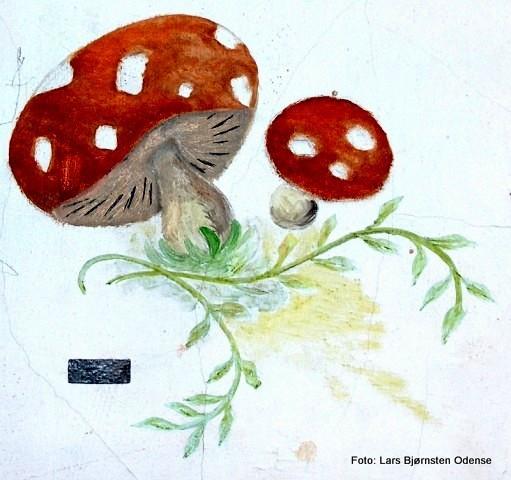 1-svampe-de-vilde-svaner-bo